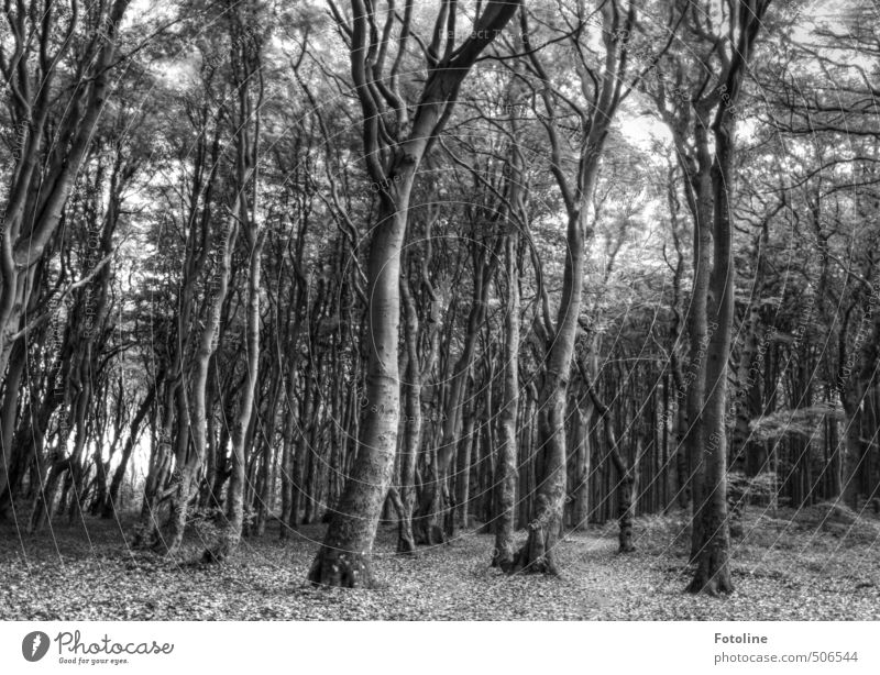 Not only black/white Environment Nature Landscape Plant Tree Wild plant Forest Gray Black White Mysterious Dark Ghost forest Spooky HDR Black & white photo