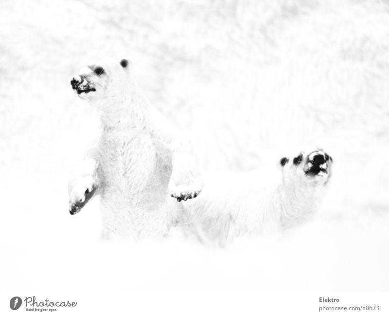 Winter Cold Snow Ice Pelt Zoo Mammal Bear Geography North Pole Polar Bear Antarctica The Arctic Scent Arctic circle