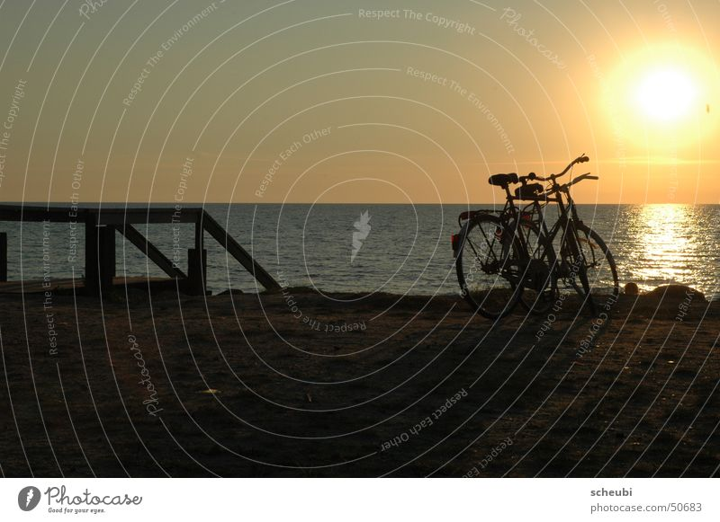 Water Sun Ocean Beach Bicycle Together Romance Events
