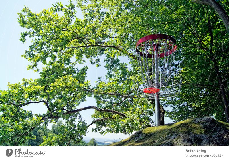 target Sports disc golf Frisbee Basket Sporting Complex Environment Nature Landscape Plant Air Sky Summer Weather Beautiful weather Warmth Tree Moss Leaf Forest