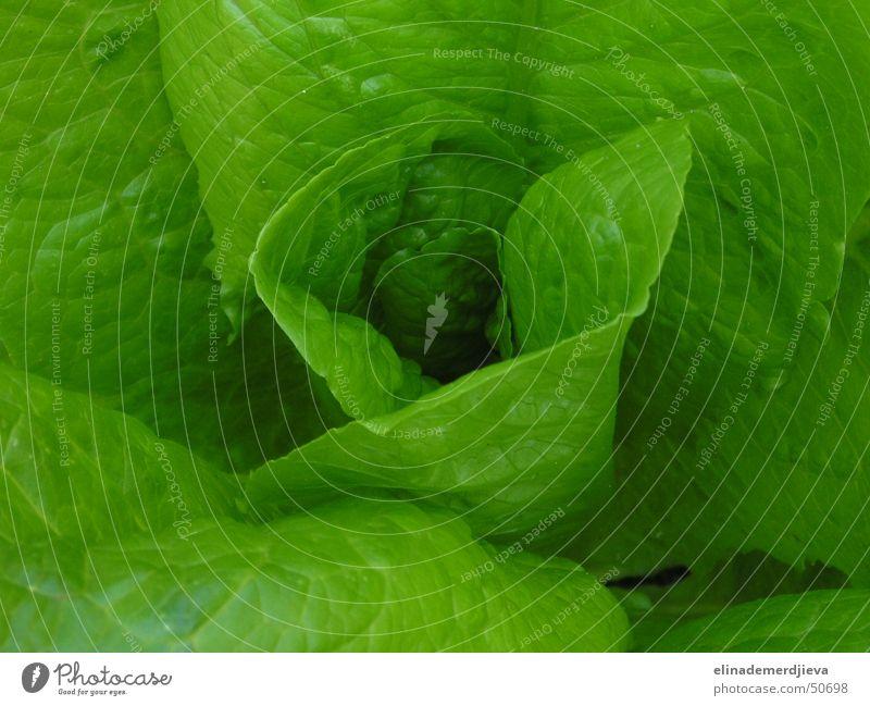 Letuce Soft Light letuce vegetable leaf leaves twist Air salad