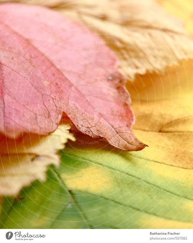 parted Environment Nature Spring Autumn Plant Leaf Garden Forest Change Transience Multicoloured Colour photo Subdued colour Exterior shot Close-up Detail