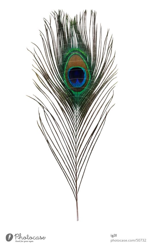 Green Blue Beautiful Joy Loneliness Eyes Elegant Glittering Threat Feather Soft Thin Part Individual Jewellery Watchfulness
