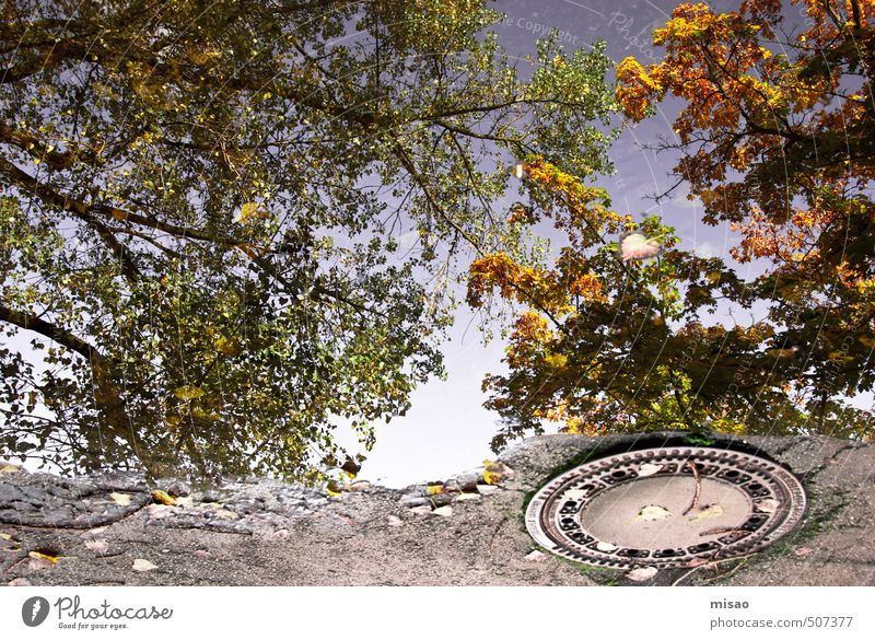 Autumn in the puddle II Fragrance Construction site Solar Power Environment Nature Air Cloudless sky Beautiful weather Tree Park Town Outskirts Deserted Places