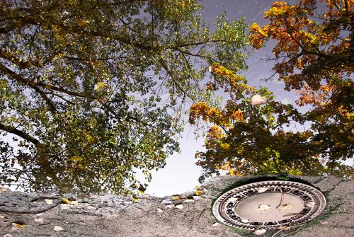 Nature City Green Tree Calm Environment Street Autumn Gray Metal Air Brown Orange Park Beautiful weather Places