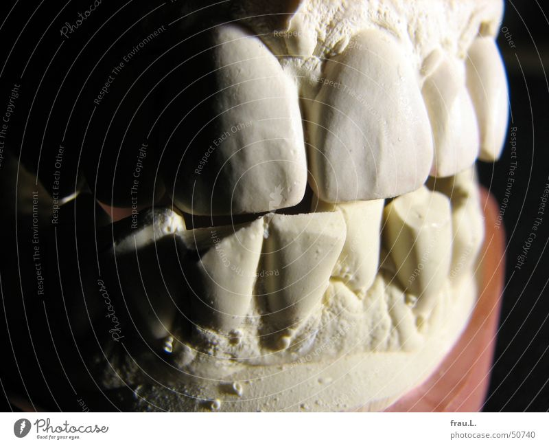 Human being Healthy Teeth Things Disgust Dentist Gypsum Imprint Trenchant Snarl Dental model