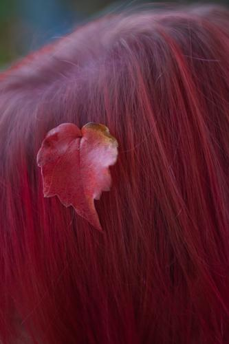 autumn Autumn Leaf Hair and hairstyles Part Pink Red Colour photo Multicoloured Detail Copy Space bottom