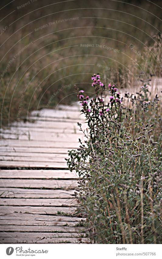 by hook or by crook Nature Landscape Plant Grass Bushes Wild plant Thistle Thistle blossom Meadow Lanes & trails Woodway Promenade Hiking Wooden board