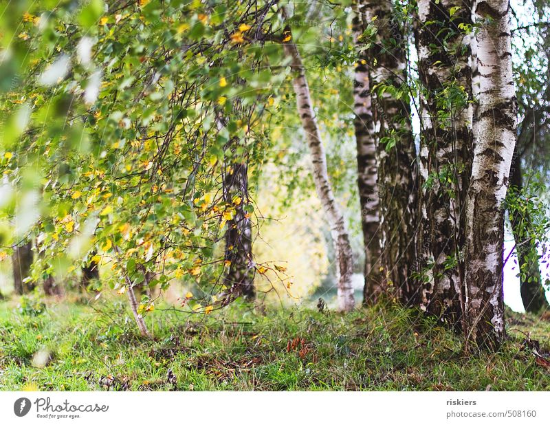Nature Green Plant Summer Sun Tree Landscape Forest Yellow Environment Life Autumn Lanes & trails Natural Park Idyll