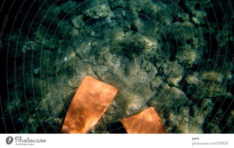 Water Ocean Orange Dive Duck Water wings Snorkeling Bottom of the sea