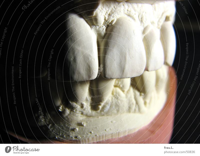 Sometimes I want to bite. Trenchant Dental impression Healthy Human being Gypsum Teeth Dental implant Macro (Extreme close-up) Incisor