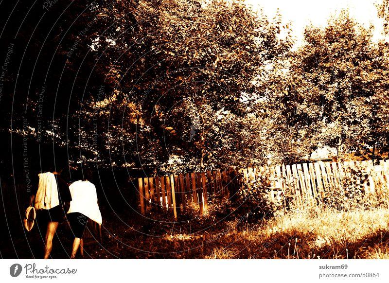 bathers Bather Hedge Tree Meadow Garden door Summer Bathroom Gate Landscape Nature Masuria