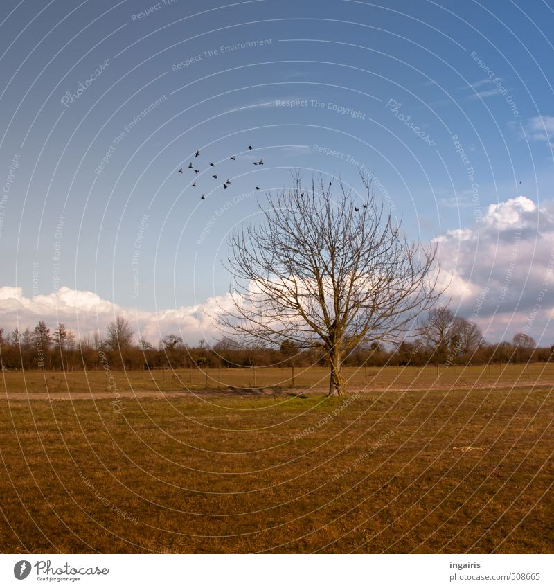 rural Nature Landscape Sky Clouds Autumn Winter Plant Tree Grass Field Animal Bird Flock Relaxation Flying Natural Blue Brown Yellow Green Black White Moody
