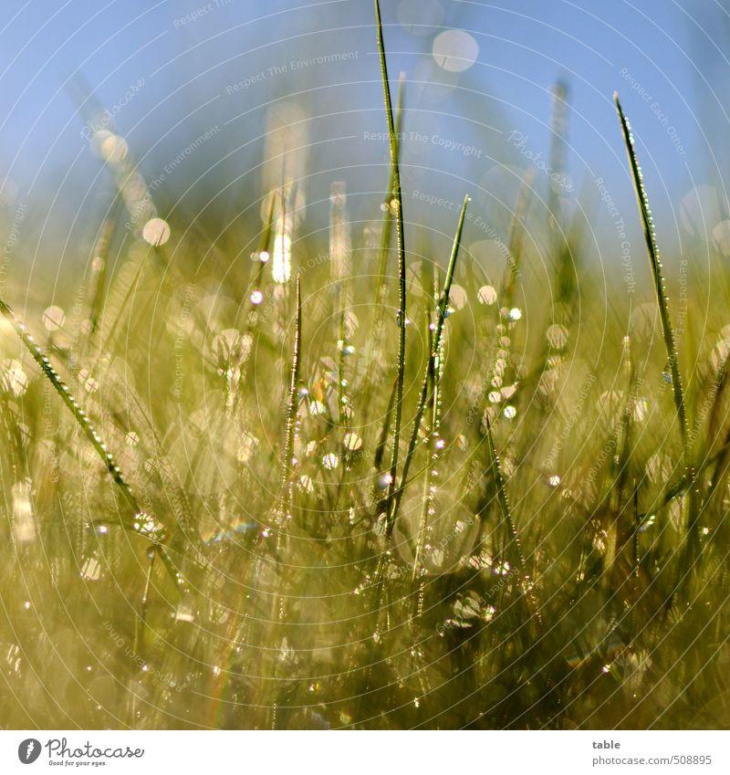 Sky Nature Blue Green Water Plant Summer Landscape Environment Meadow Autumn Grass Spring Garden Park Glittering