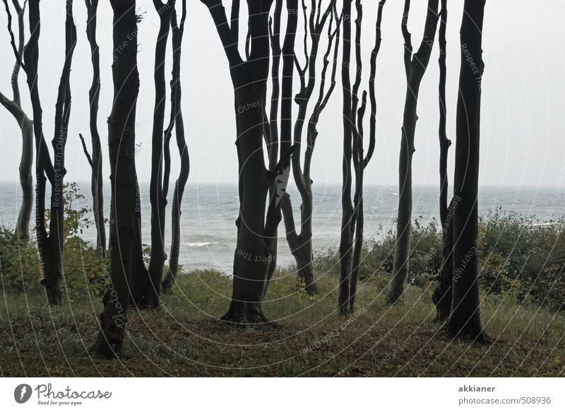 Ghost Forest II Environment Nature Landscape Plant Sky Autumn Tree Natural Ghost forest Beech wood Beech tree Colour photo Subdued colour Exterior shot Day