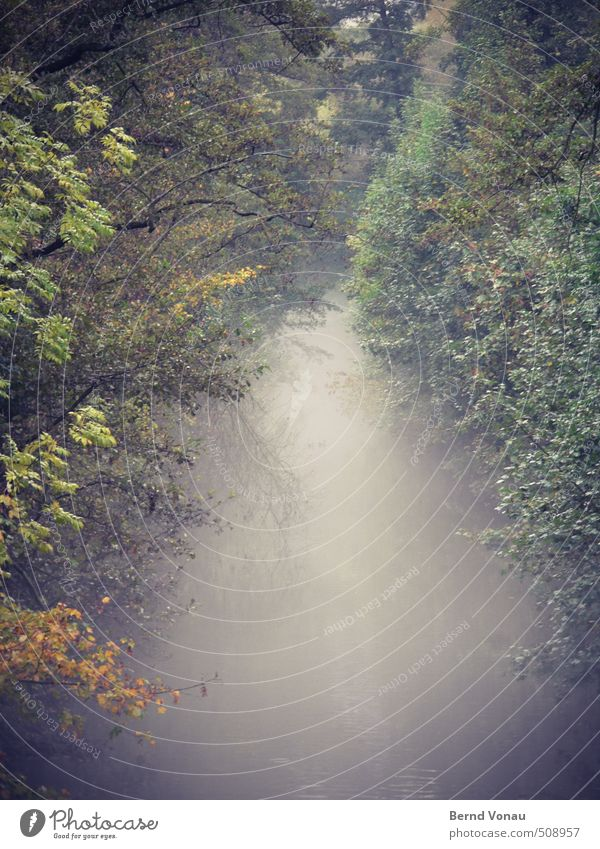 Nebulous waters Water Autumn Plant Tree Bushes Brook Banks of a brook Brown Yellow Gray Green Red Haze Shroud of fog Gloomy Moody Goodbye Far-off places