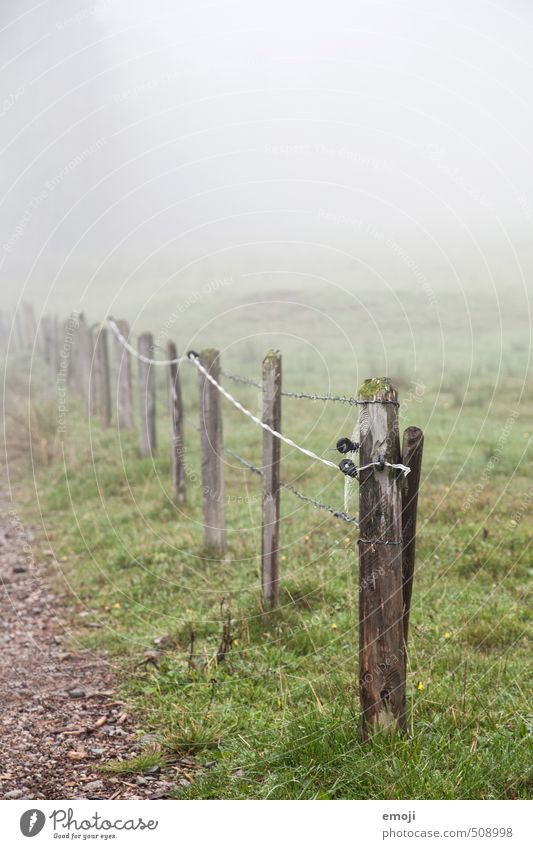I've got one of those too. Environment Nature Landscape Autumn Bad weather Fog Field Natural Gray Green Fence post Rural Colour photo Subdued colour