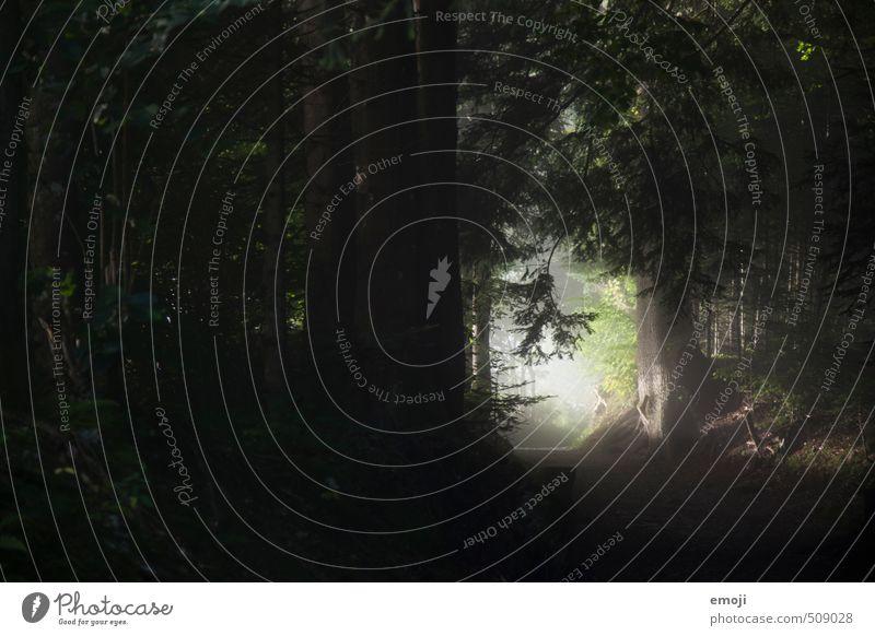 Nature Tree Landscape Forest Dark Environment Natural Bushes Creepy