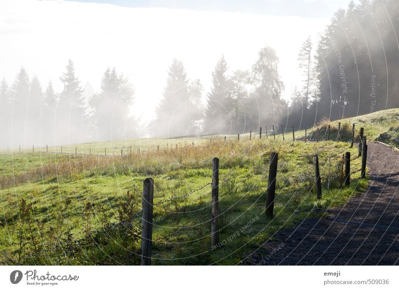 OPPOSITE Environment Nature Landscape Autumn Fog Meadow Field Natural Green Fence Fog boundary Colour photo Exterior shot Deserted Day Wide angle