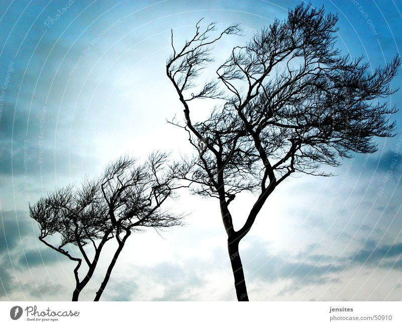 Nature Sky Tree Blue Winter Cold Gray Germany Wind Branch Dynamics Baltic Sea Comfortless Wind cripple