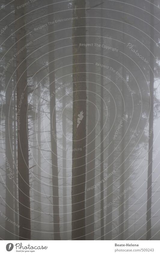 Nature Tree Loneliness Black Forest Dark Cold Environment Senior citizen Sadness Autumn Gray Fog Hiking Threat Transience