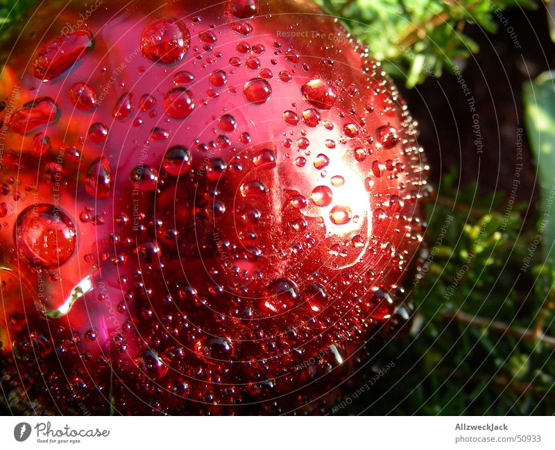 Christmas & Advent Red Drops of water Wet Rope Fresh Round Decoration Sphere Damp Dew Anticipation Christmas decoration Moistened