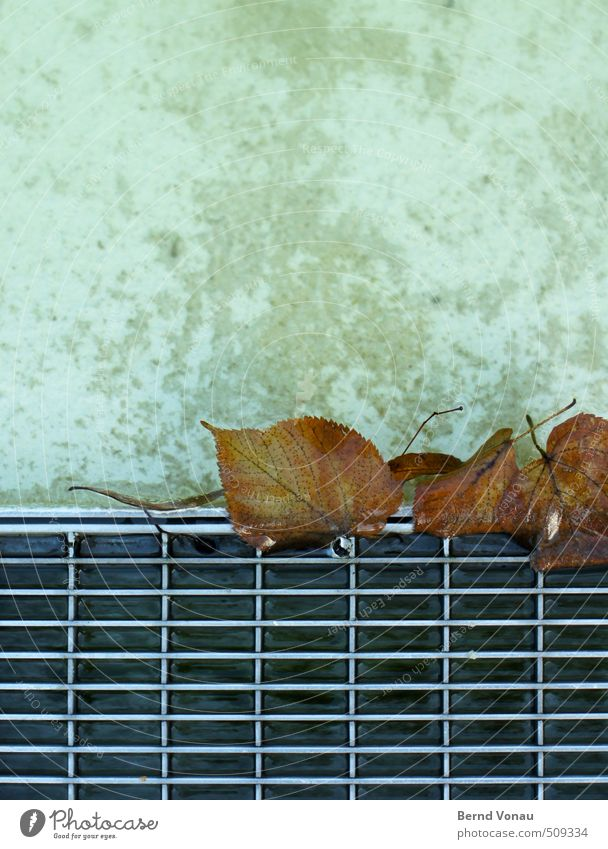 get caught Water Autumn Leaf Wet Under Town Brown Gray Black Silver White Metal Drainage Metal grid Rectangle Concrete Well Captured Colour photo Exterior shot