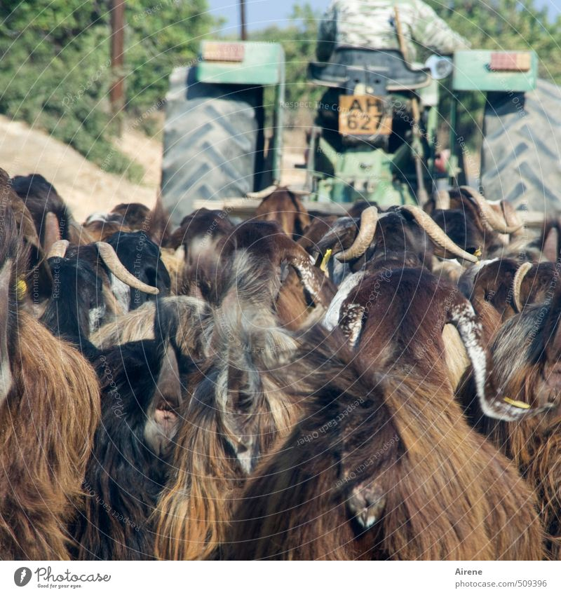 Human being Man Green Animal Adults Funny Brown Together Masculine Walking Group of animals Driving Agriculture Trust Pet Vehicle