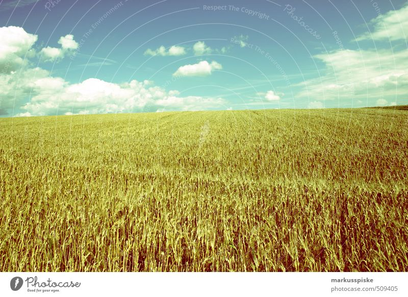wheat field Food Organic produce Vegetarian diet Slow food Gardening self-catering lohas locavore Urban gardening Agriculture Forestry Meadow Field