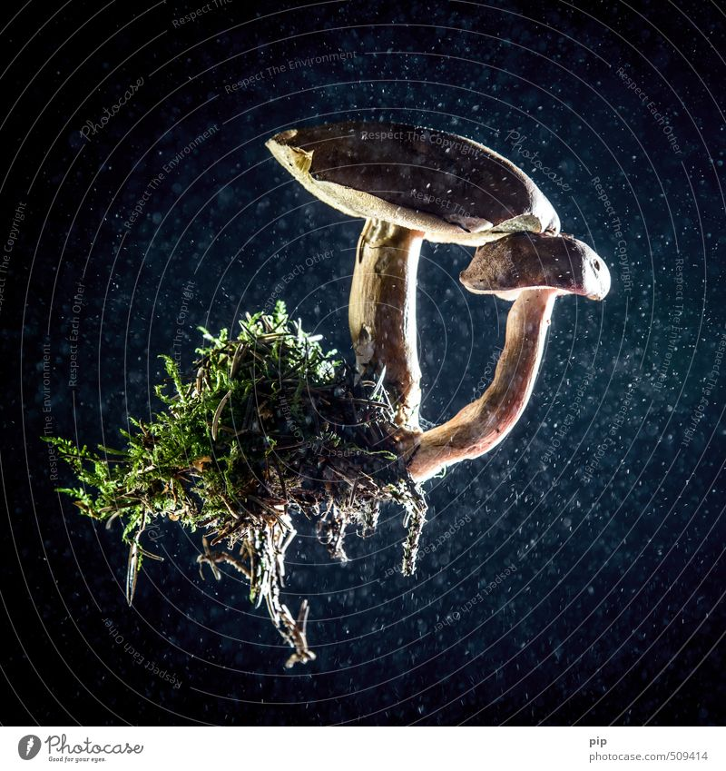 completely detached Environment Nature Plant Moss Root Blue Brown Green Healthy Eating Mushroom Mushroom cap boletus Cep Hover Dust 2 Abstract Colour photo