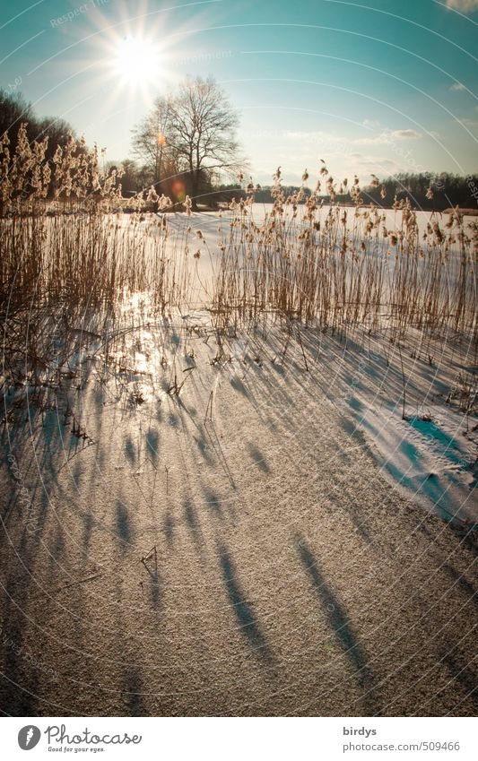 every year Nature Sky Sun Winter Beautiful weather Ice Frost Snow Common Reed Lakeside Illuminate Esthetic Positive Idyll Calm Tree Shadow Colour photo