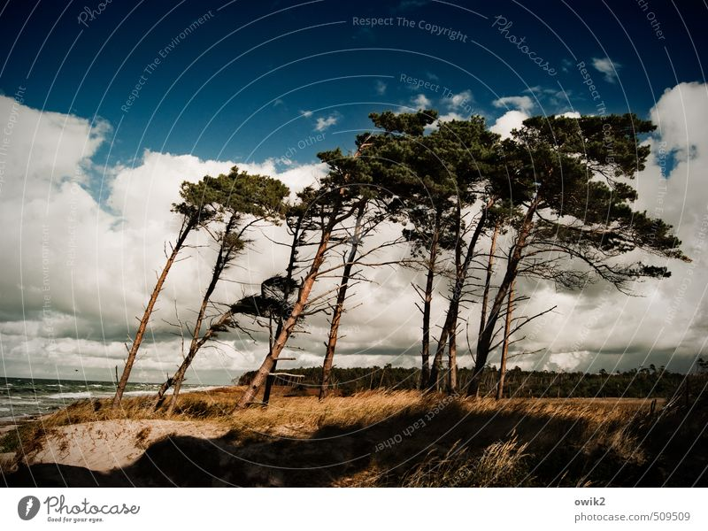 Right leg Environment Nature Landscape Plant Water Sky Clouds Horizon Climate Beautiful weather Wind Gale Tree Bushes Wind cripple Coniferous trees Coast