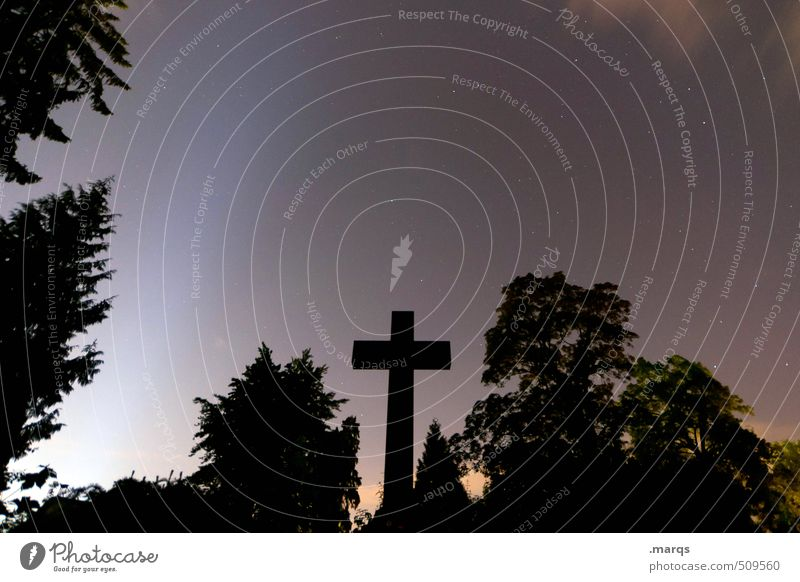 † Nature Landscape Cloudless sky Night sky Stars Summer Tree Bushes Sign Crucifix Dark Creepy Moody Fear End Belief Religion and faith Calm Death Cemetery