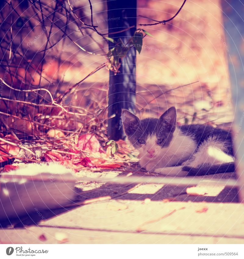 Cat Calm Animal Warmth Baby animal Idyll Hope Patient