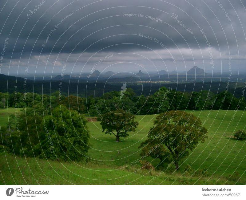 Nature Green Calm Far-off places Life Dark Meadow Mountain Freedom Landscape Horizon To enjoy Australia Juicy Impression Queensland