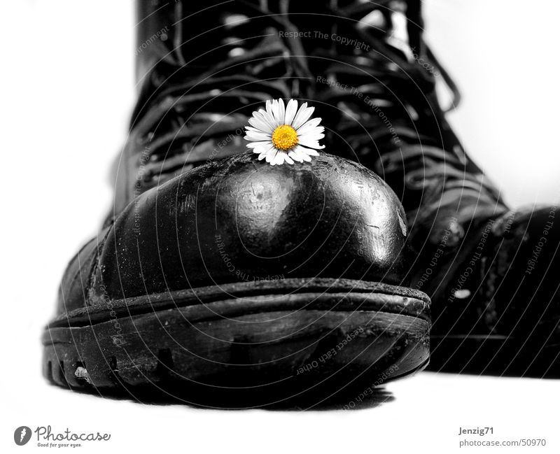 Hard shell. Boots Footwear Laced boot Combat boots Daisy Flower Force