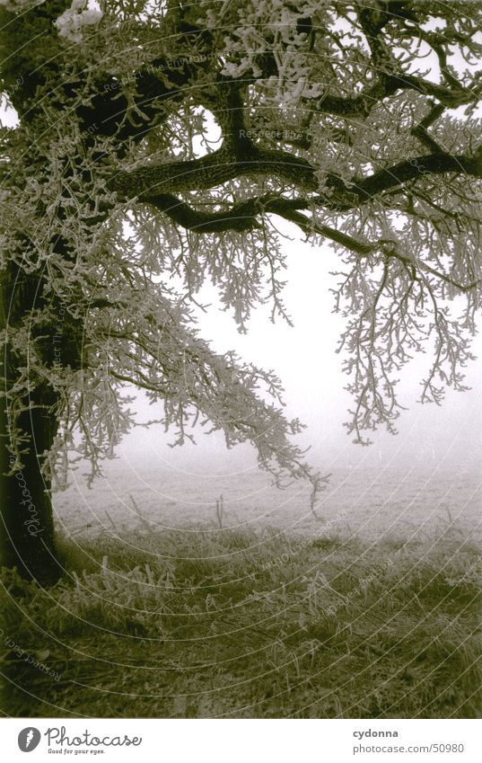 tree Tree Winter Hoar frost Cold Impression Meadow Fog Romance Loneliness Black & white photo Frost Snow Branch Landscape