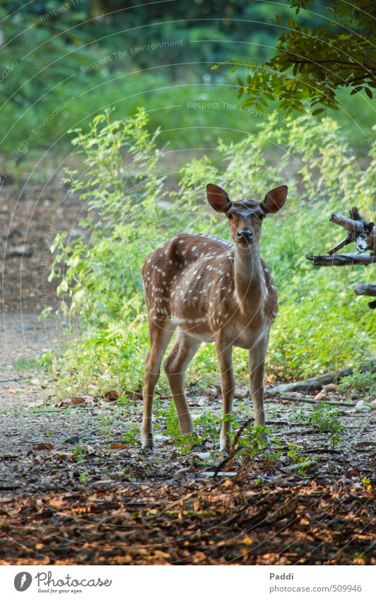 reh Environment Nature Landscape Plant Animal Wild animal Roe deer 1 Contentment Brave Trust Attentive Watchfulness Calm Colour photo Exterior shot Deserted