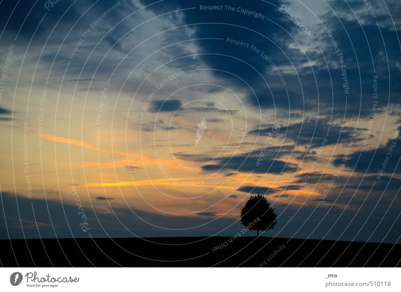 silhouette Far-off places Freedom Landscape Air Sky Clouds Night sky Sunrise Sunset Tree Field Hill Fantastic Infinity Blue Yellow Orange Black Emotions Fatigue