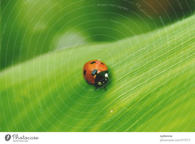 Nature Beautiful Green Red Leaf Animal Spring Small Protection Insect Discover Ladybird Beetle Wake up