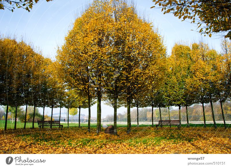 City Plant Tree Leaf Yellow Autumn Germany Park Gold Europe Beautiful weather Round Bench Autumn leaves Autumnal Circular