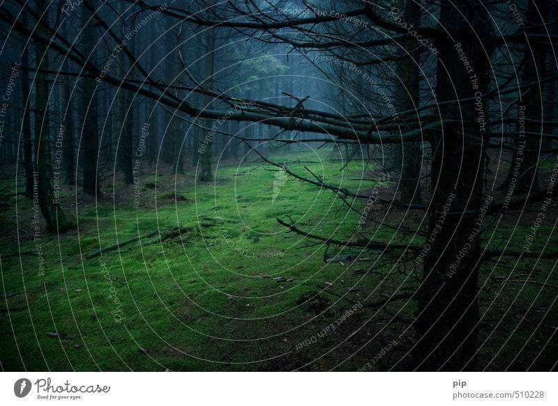 Nature Blue Tree Loneliness Landscape Calm Black Forest Dark Environment Autumn Brown Fog Creepy Fir tree Moss