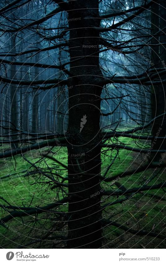 Nature Blue Green Tree Loneliness Landscape Calm Black Forest Dark Environment Autumn Fog Creepy Fir tree Moss
