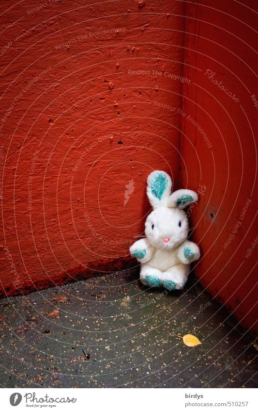 killing me softly Autumn Leaf Wall (barrier) Wall (building) Corner Hare & Rabbit & Bunny 1 Animal Cuddly toy Looking Sit Wait Beautiful Cute Rebellious Gray