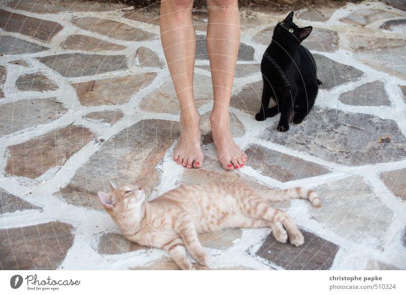 Cat Animal Feminine Feet Lie Cute Observe Curiosity Appetite Passion Pet Brash Cuddly Sympathy Love of animals Meow