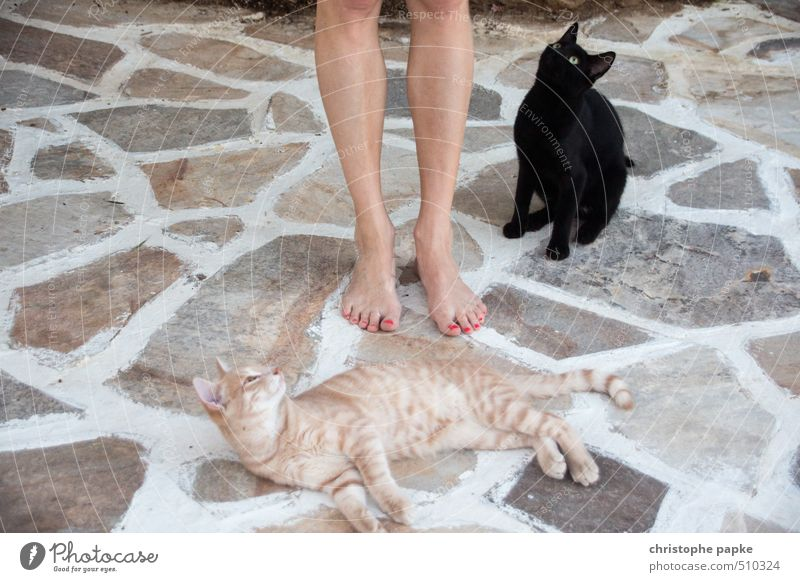 They lie at her feet Feminine Feet Animal Pet Cat 2 Observe Lie Brash Curiosity Cute Passion Sympathy Love of animals Appetite Cuddly Meow Colour photo