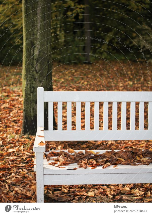 autumn. Nature Autumn Tree Leaf Relaxation Bright Wet Center point Bench Cold Sit Wood White Park Break Colour photo Subdued colour Exterior shot Deserted
