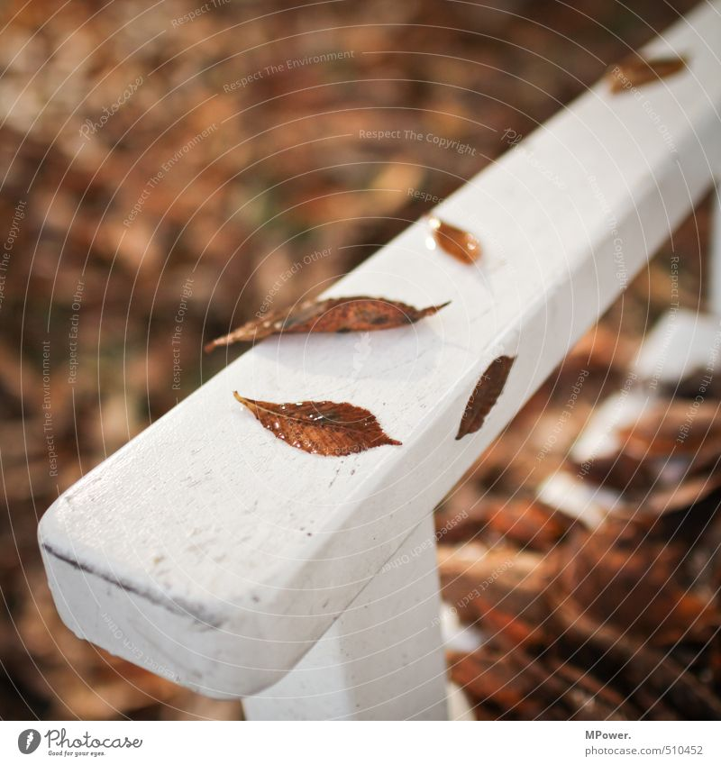 Nature White Tree Relaxation Leaf Cold Autumn Wood Bright Brown Park Sit Wet Break Bench Center point