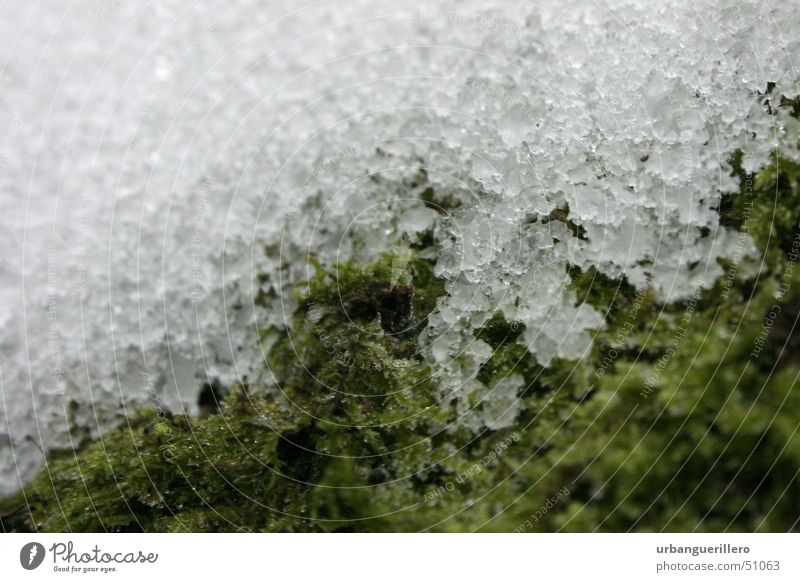 White Green Cold Snow Small To go for a walk Soft Hard Crystal structure Progress Photomicrograph Melt Snow crystal Snow melt