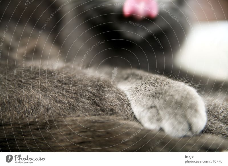 Cat Relaxation Calm Animal Emotions Lie Contentment Clean Soft Break Pelt Near Delicious Pet Paw Cuddly